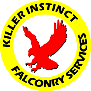 KI Falconry